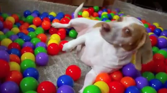ძაღლს საუკეთესო დაბადების დღის საჩუქარი გაუკეთეს