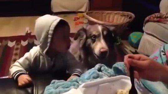 ძაღლმა ბავშვს ლაპარაკში აჯობა