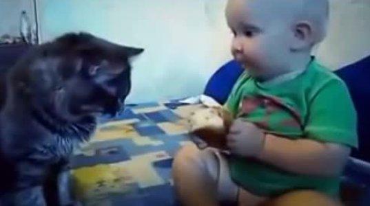 კატასთან ერთად ჭამს პურს