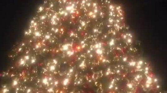 რატი დურგლიშვილმა ლოს-ანჯელესში ნაძვის ხეს ვიდეო გადაუღო