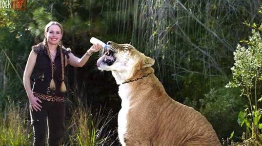 12 ჰიბრიდი ცხოველი, რომელიც რეალურად არსებობს