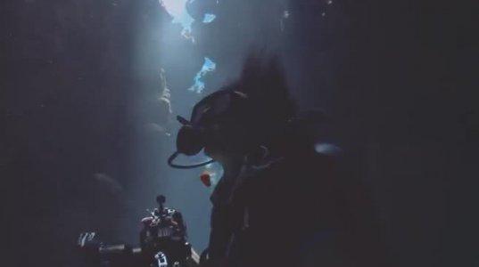 ფოტოსესია ზვიგენებს შორის