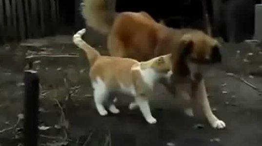 სიყვარული კატის და ძაღლის– უჩვეულო და მომხიბვლელი.