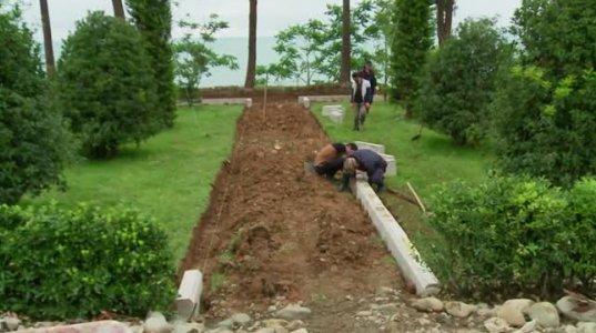 ციხისძირში უნიკალური ჯიშის ხეების ბაღი გაშენდა