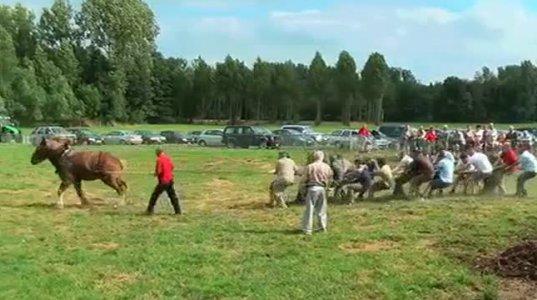 ასე გამოიყურება ერთი ცხენის ძალა