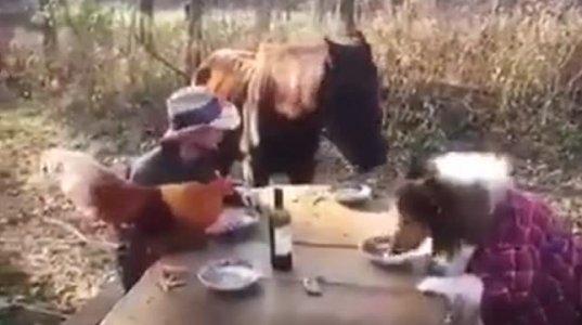 სადილი შინაურ ცხოველებთან