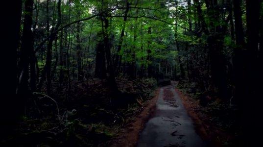 10 ყველაზე საშიში ტყე+15